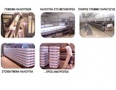 Feta Cheese production lines